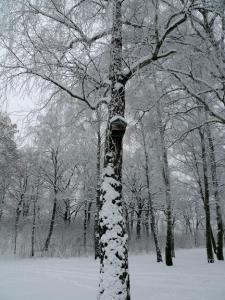 Vinter i Hässleholm