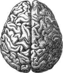 Hjärnan2 fri