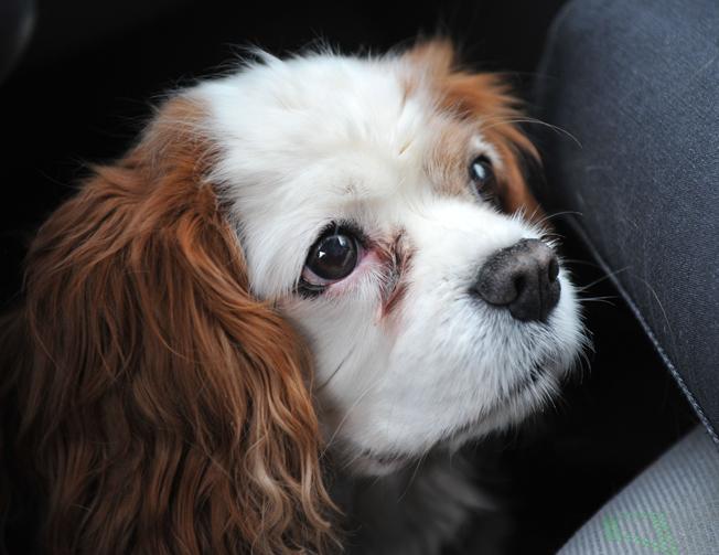 Molly, 14 år