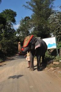 Festivalfin elefant på väg till jobbet. (Nikon D3)