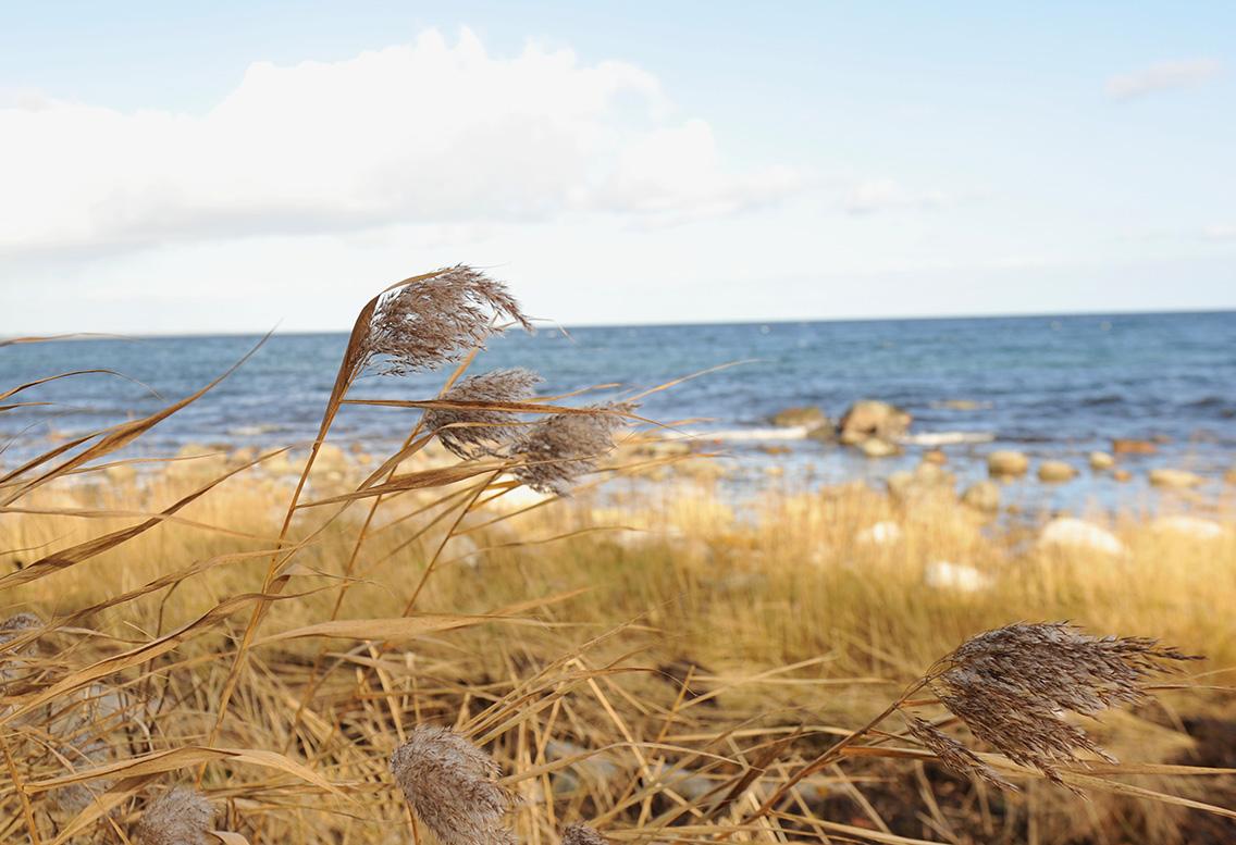 Snåla vindar en oktoberdag vid Hanöbukten. Sommarens badgäster är långt borta.